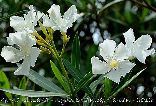 Glória Ishizaka -   Kyoto Botanical Garden 2012 - 34