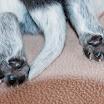 Puppies_Tria-01418.jpg