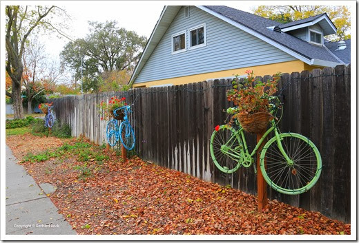 Bicycles and geraniums