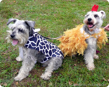 dog-chicken-cow-halloween-costume