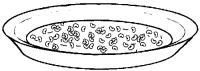 Frijoles en plato -Pina