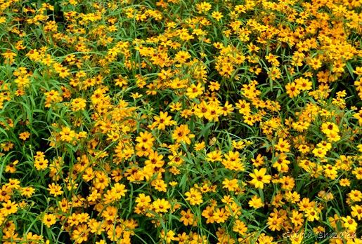 Glória Ishizaka - Flor amarela 19