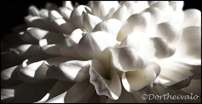 kronblade
