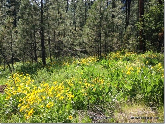 Idaho_May2014 108-001