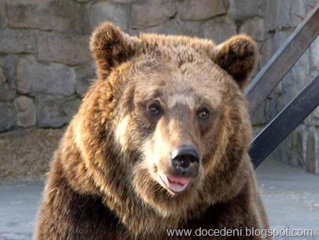 urso um olhar