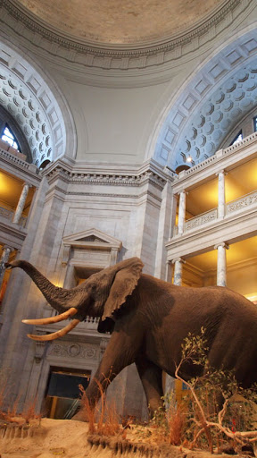 Inside of the Natural History Museum