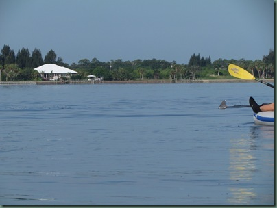 Al kayaking with dolphin