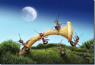 fantasy-world-of-ants7