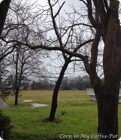 rain puddles winter 2015