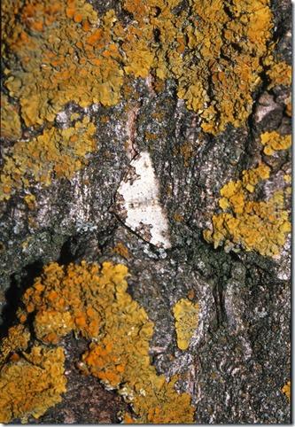 chabier54 mariposa. Fuente de los saces berrueco