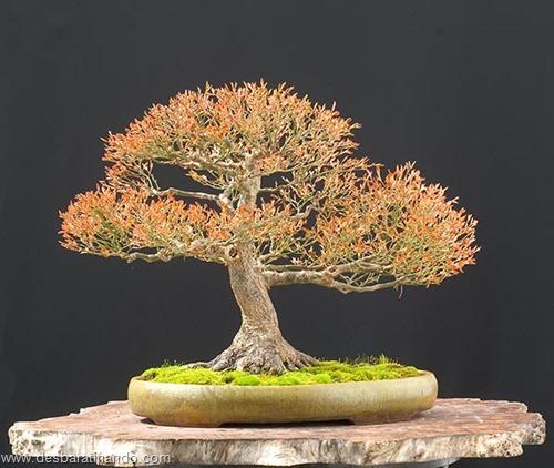 bonsais arvores em miniatura desbaratinando (78)