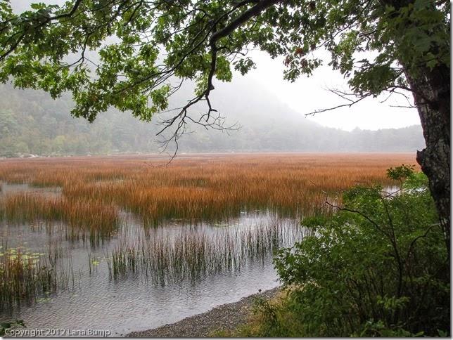 Acadia in the rain
