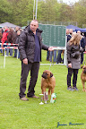 20100513-Bullmastiff-Clubmatch_31002.jpg