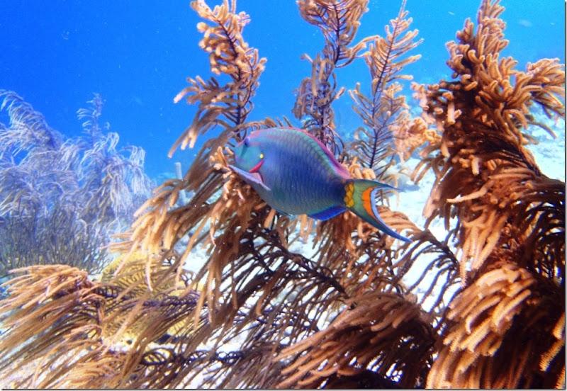 023f blue parrot