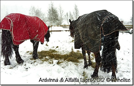 ardvinna-alf-1april2012