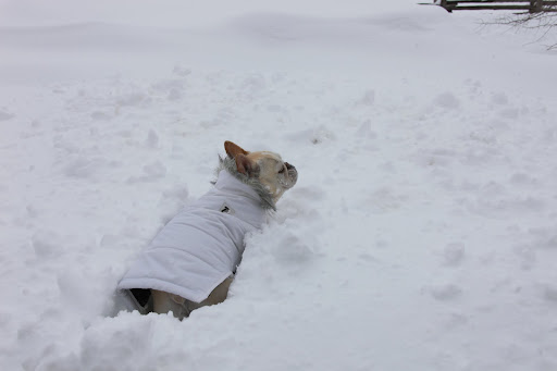 I think it's time for a little romp.  Remember how much fun it is to romp in the snow?