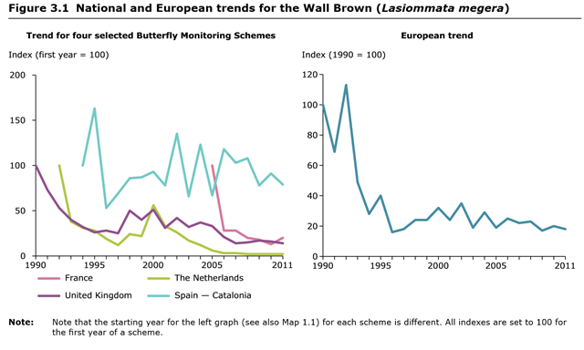 National and European trends for the Wall Brown butterfly (Lasiommata megera), 1990-2011. Graphic: EEA