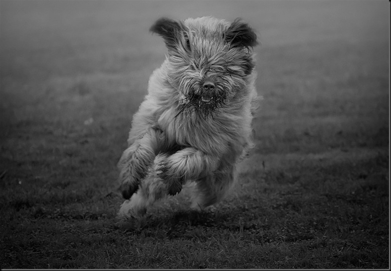 Action dog...