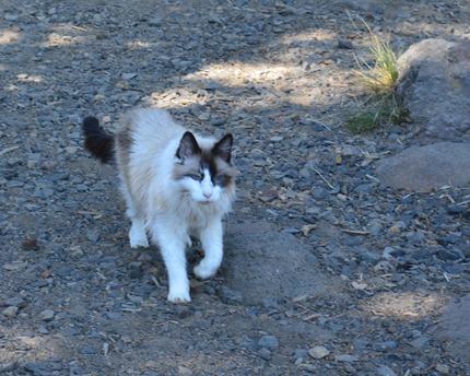 camping kitty
