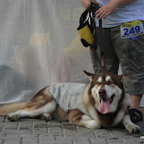 Pet Express Doggie Run 2012 Philippines. Jpg (254).JPG