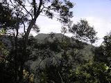 Malabar - Gunung Haruman as seen from the ascent to Gunung Mega (Daniel Quinn, March 2011)
