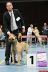 20130511-BMCN-Bullmastiff-Championship-Clubmatch-2173.jpg