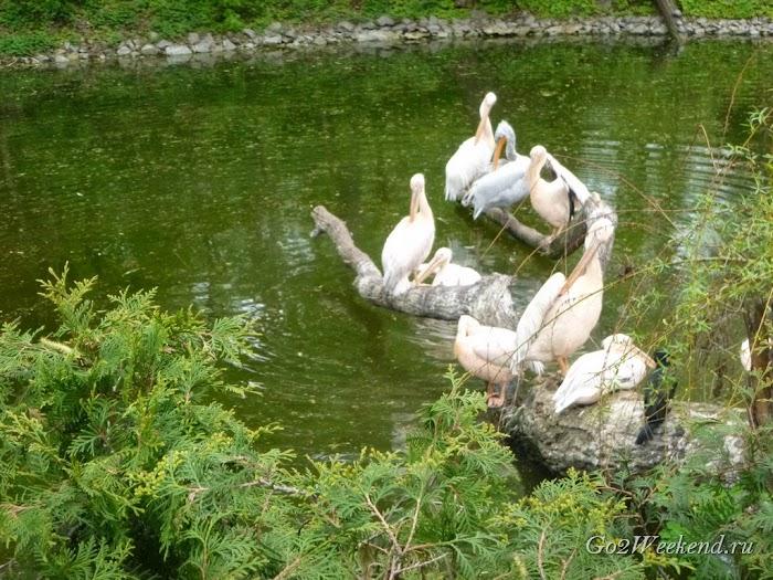 Kiev_Zoo_4.jpg