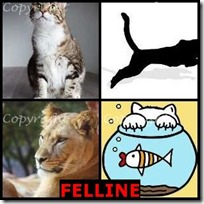 FELLINE- 4 Pics 1 Word Answers 3 Letters