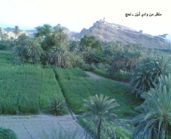 منظر من وادي لحج2