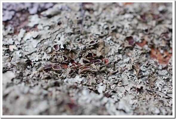 Lichenscapes (3)