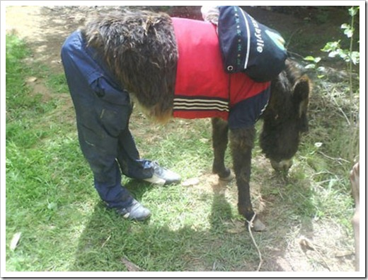 A donkey wearing clothes