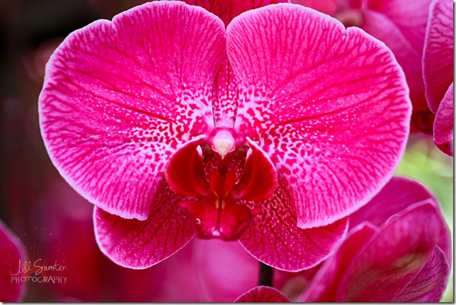 flowers-0575