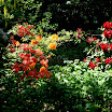 Gleaner Gardens 074.JPG