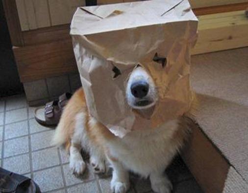 cachorro-feio