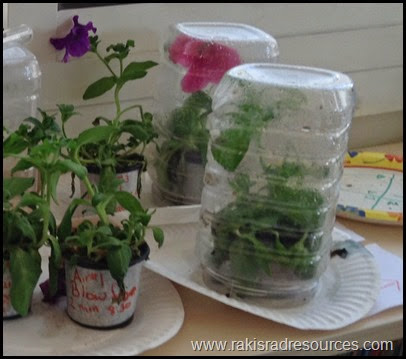 photo The Great Plant Experiment - Let students build experiments using the needs of a plant (air, soil, light, water) as the variables in a student designed experiment using the Scientific Method - Raki's Rad Resources - Labeling Variations
