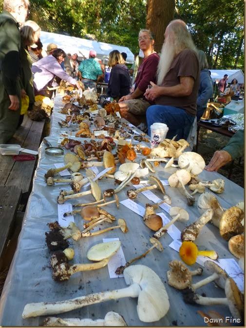 Mushroom festival_109
