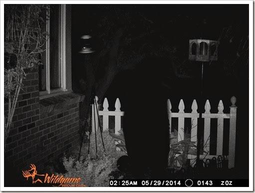 bear may 2014 053