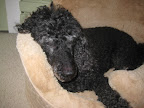 Gordon, Jane C.'s 15 year old poodle, loves his new plush bed!