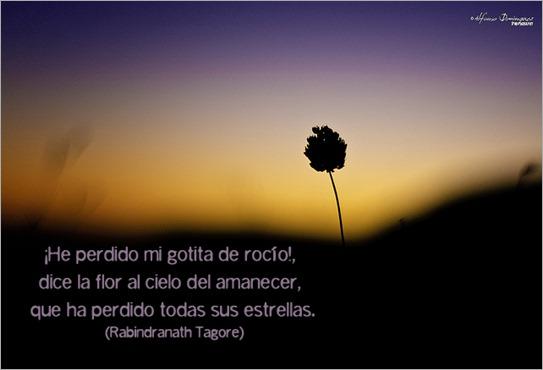 la_flor_y_el_amanecer