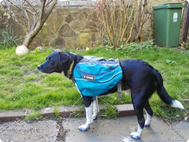 lucky's new panniers