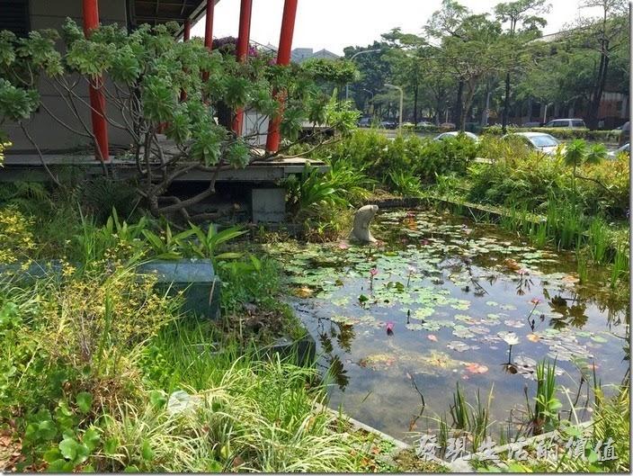 台南成功大學(力行校區)綠色魔法學校。花木扶疏的生態池。
