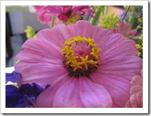 20120919_flowers_004