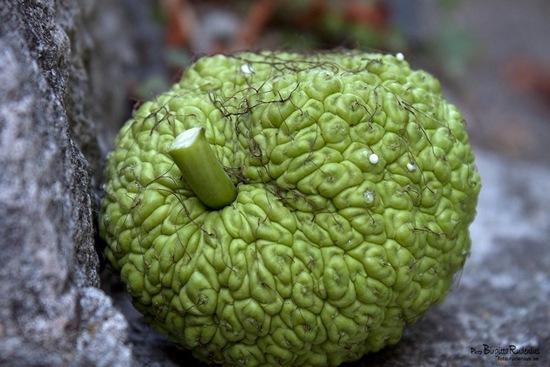 macro_20110904_fruit