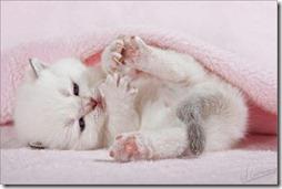 10 -Fotos de gato buscoimagenes (38)