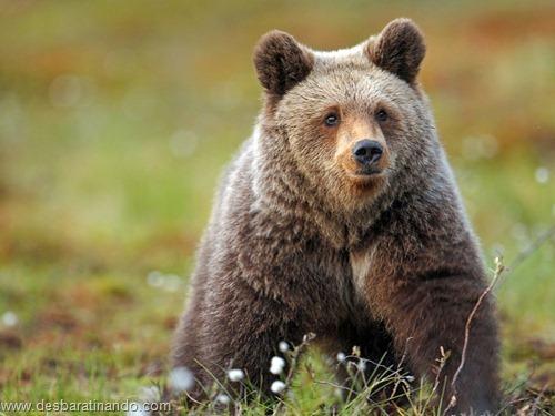 animais national geographic desbaratinando  (8)