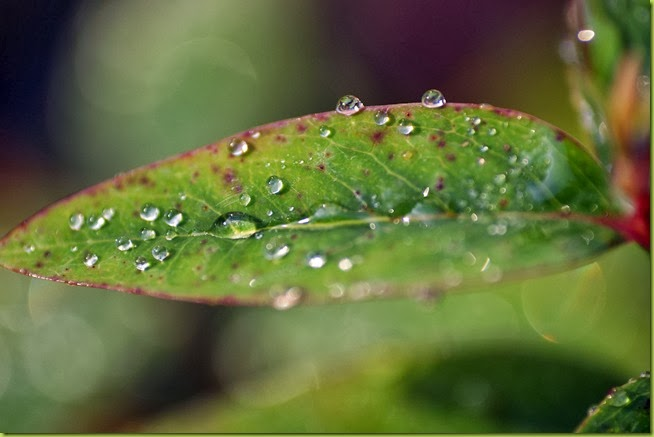wtaer droplets on leaf