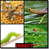 INSECT- 4 Pics 1 Word Answers 3 Letters