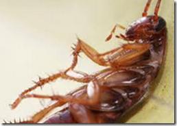 Gel ahuyentador de cucarachas a base de hormonas y más incecticidas