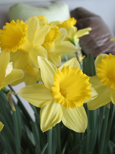 Daffodils are so sweet.