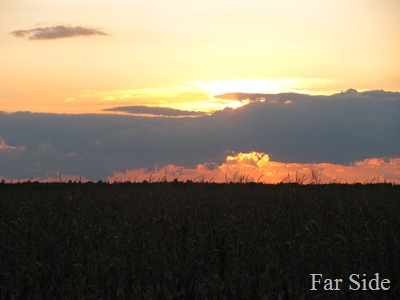 Sunset over the corn field